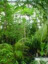 ジャングルコーナー